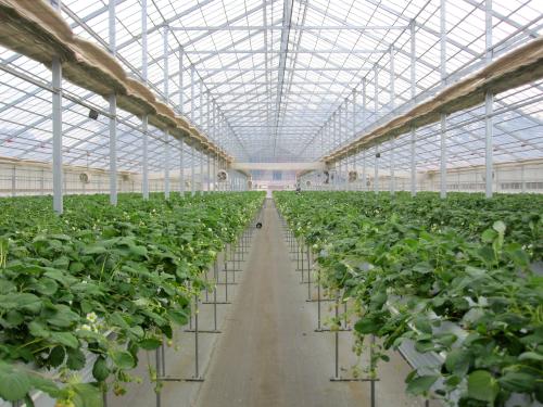 太陽光利用型の植物工場