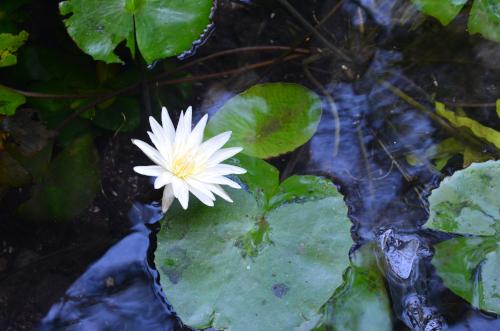 グランセノーテの綺麗な花