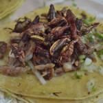 メキシコの虫料理に挑戦!イナゴを食べて育った長野県民が昆虫食文化が残るメキシコでクモ、サソリ、カメムシなど9種類の虫料理を食べ尽くした