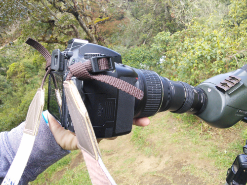 野鳥観察用望遠鏡で写真を撮影する方法