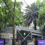 メキシコの穴場観光地!メキシコシティのスターバックスは世界の美しすぎるスタバ17選に選出された