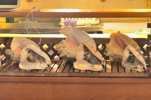 ユカタン半島特産のカラコル貝