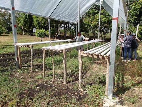 パナマの水耕栽培