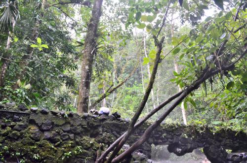 タバコン温泉の近く