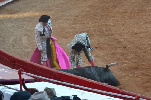 牛にトドメを刺す