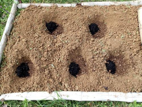肥料入りの野菜の植穴