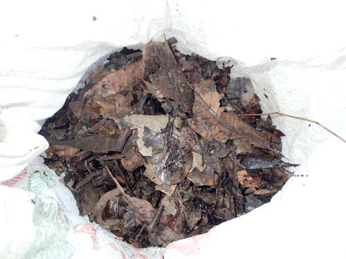 家庭菜園に使う腐葉土