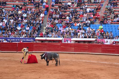 牛を向かい合う闘牛士