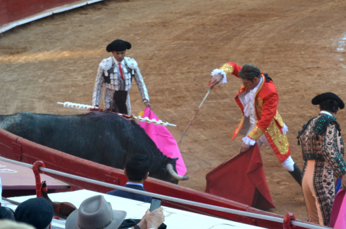 牛の首に剣を刺す闘牛士