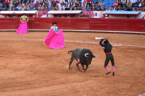 牛の背中に短剣を刺す人