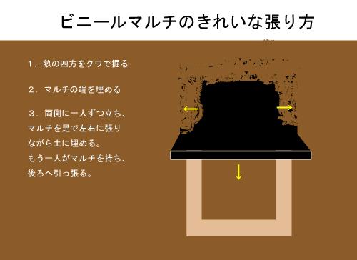 ビニールマルチのきれいな張り方3