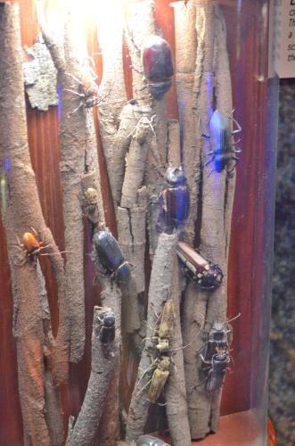 パナマ運河博物館の昆虫展示