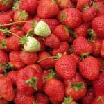 海外いちご市場を知りたい企業へ!外国で日本式の高品質イチゴ農園を起業する時に注意するべきポイント、問題点