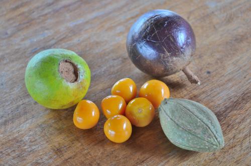 コスタリカの南国フルーツ