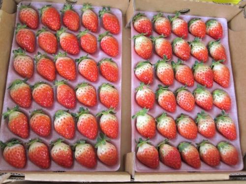 生産者から出荷されるイチゴのケース