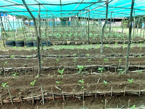 遮光資材を使った野菜畑