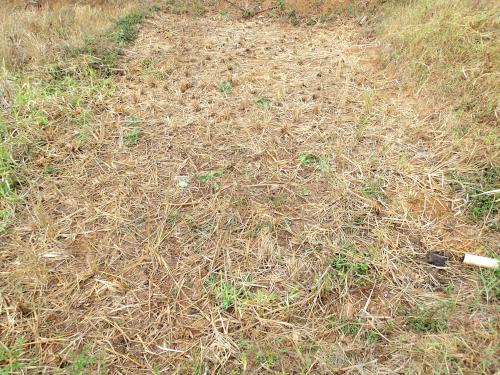 稲わらを刈り取った水田
