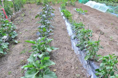 家庭菜園でのマルチングの利用