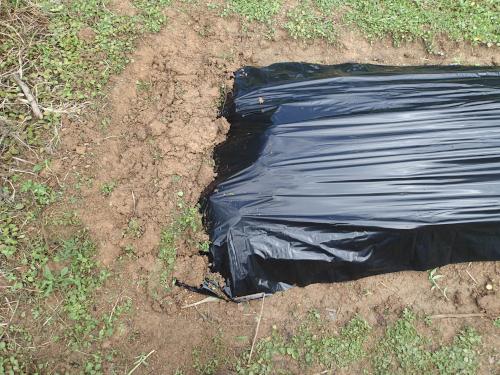 黒ビニールマルチの反対側を埋める