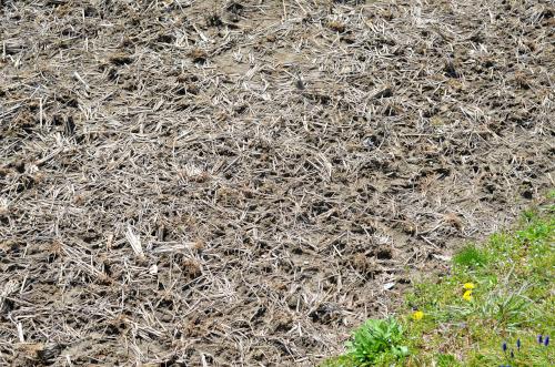 稲わらと土を混ぜる