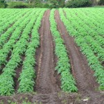 海外で農業を始める方法!野菜栽培の成功事例、準備手順、リスクをプロが解説