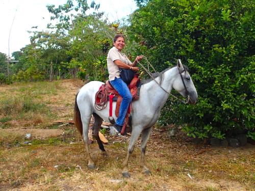 移動手段の馬
