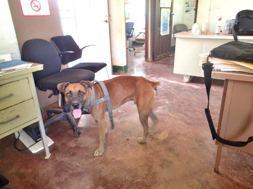 職場で窃盗・放火・不法侵入事件が発生したので、見た目は凶暴な番犬を飼い始めました