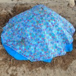 無料で作れる有機肥料の作り方!材料はカシューナッツの実(腐った果物)と馬糞(動物のフン)と稲わら(植物性廃棄物)