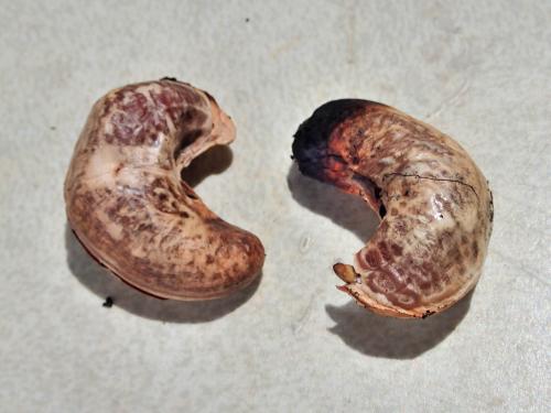 皮付きのカシューナッツ