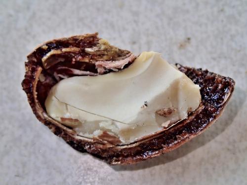 生のカシューナッツの種