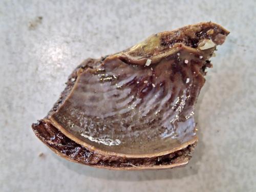 カシューナッツの殻の油