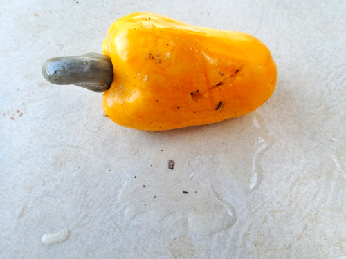カシューナッツの果肉は傷付きやすい