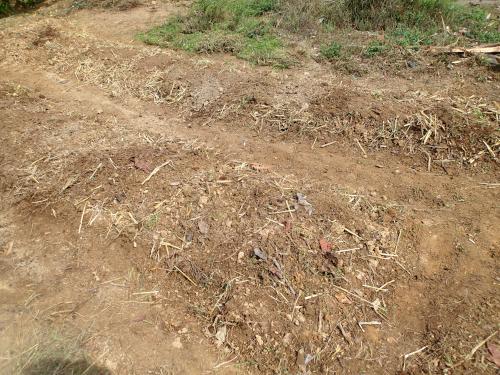 稲わらを混ぜた畝