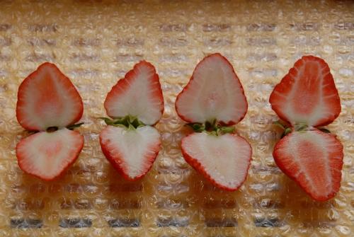 異なるイチゴ品種の果実断面