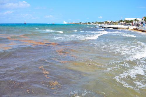 コスメル島の海