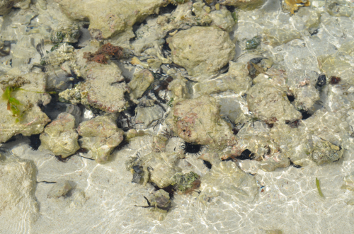 透明感あるカリブ海
