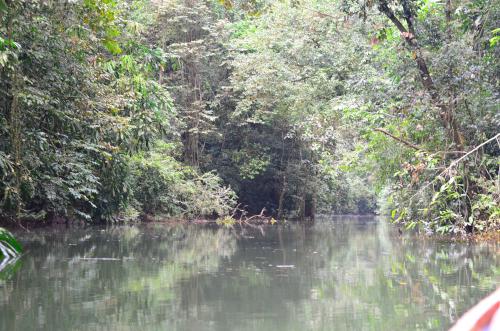 密林の中を進む