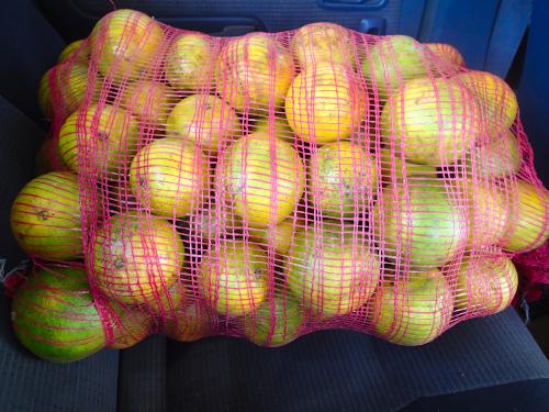 パナマのオレンジ