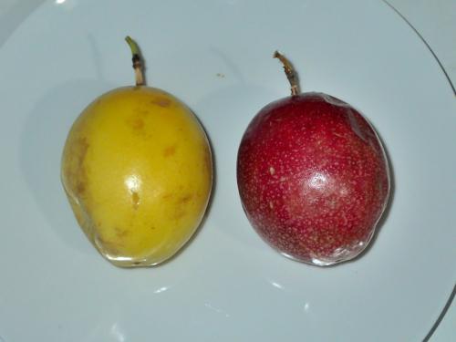 パナマのパッションフルーツ