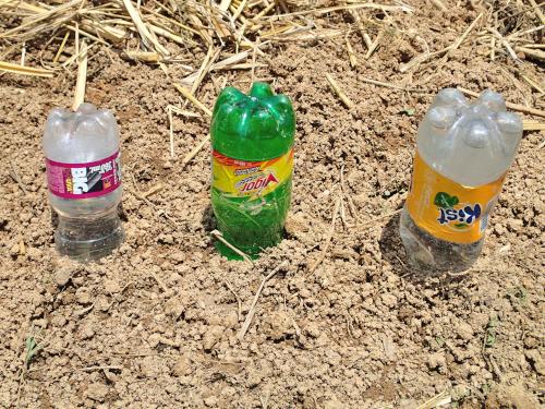 地面にペットボトルを逆さまに挿す