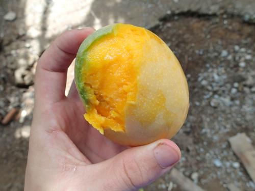 歯でマンゴーの皮をむく