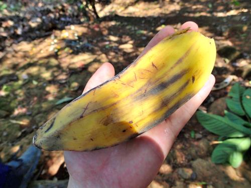 四角いバナナ