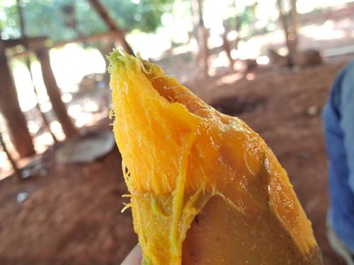 そのままマンゴーアイス