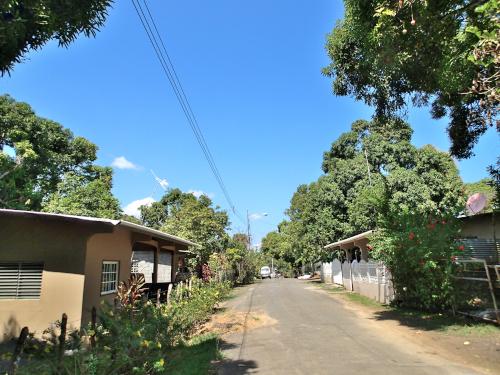 村中マンゴーの木だらけ