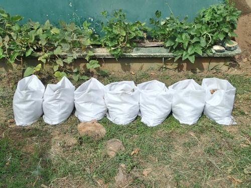 展示圃場の袋栽培