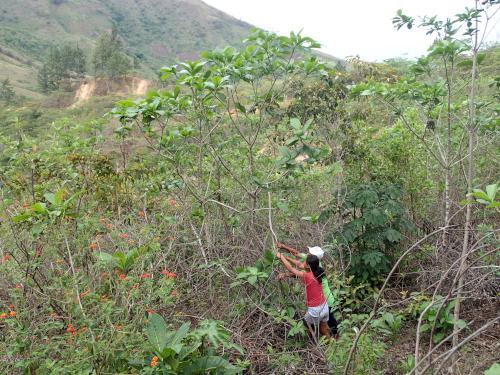 木の実を教えてくれる村人