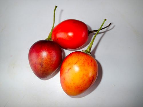 アルボルデトマテ