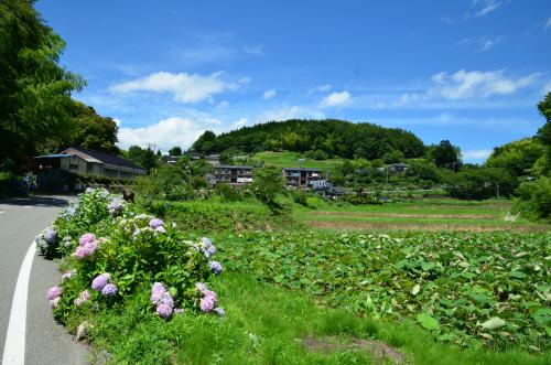 泰阜村の蓮池の全体写真