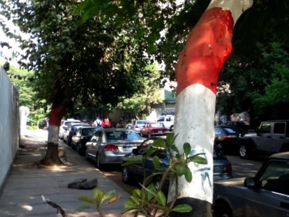 エジプト国旗柄の木