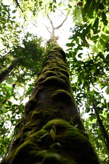 アウヤンテプイの森